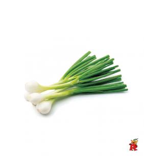 Cipollotto Bianco Fresco 1...
